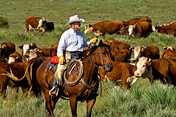 Image result for cattle ranches in texas